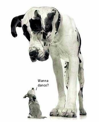 dog_dog.jpg